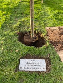 And a Tree was planted...